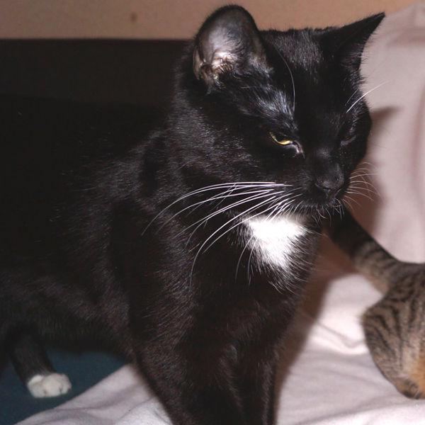 Felix und Fila