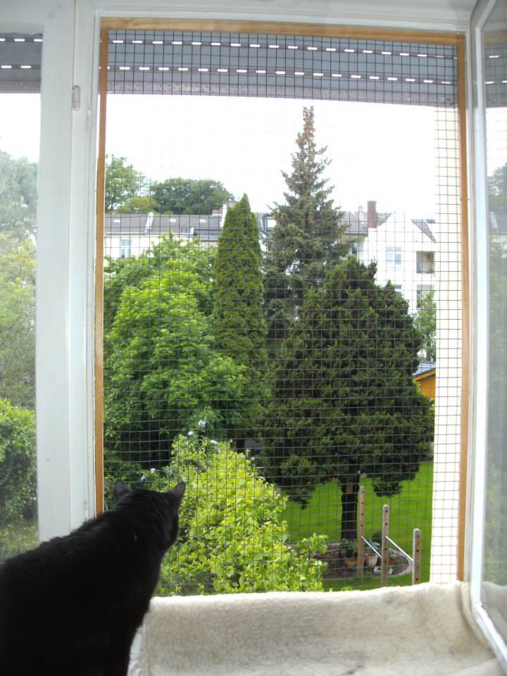 balkon und fenstersicherungen katzenschutz bonn rhein sieg ev. Black Bedroom Furniture Sets. Home Design Ideas