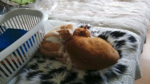 Ehemalige Moritz und Mia