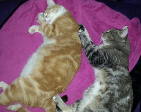 Felix und Tigger