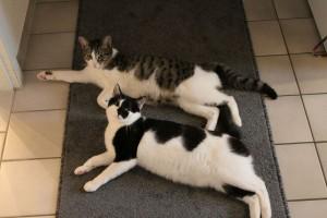 Max und Flo