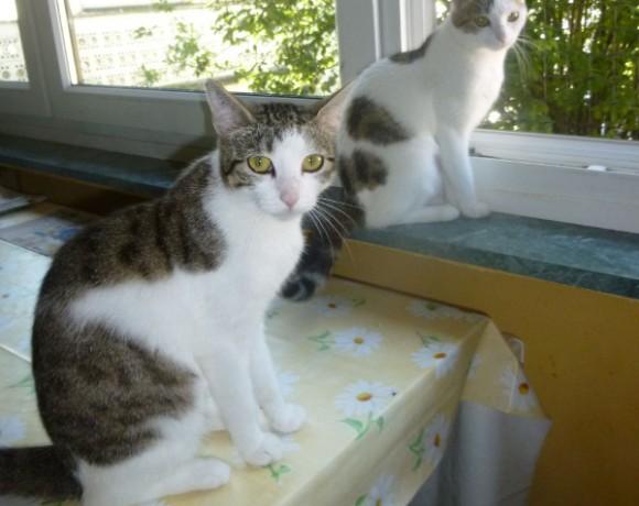 Lotte und Lisa