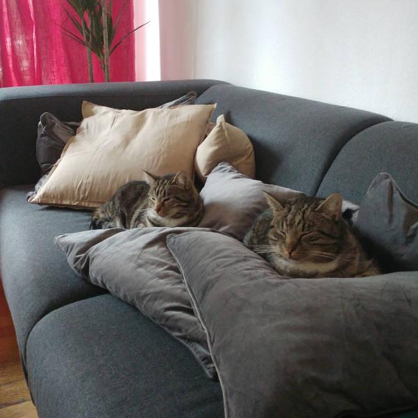 katze436_kitty_kassy