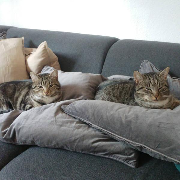 katze436_kitty_kassy2
