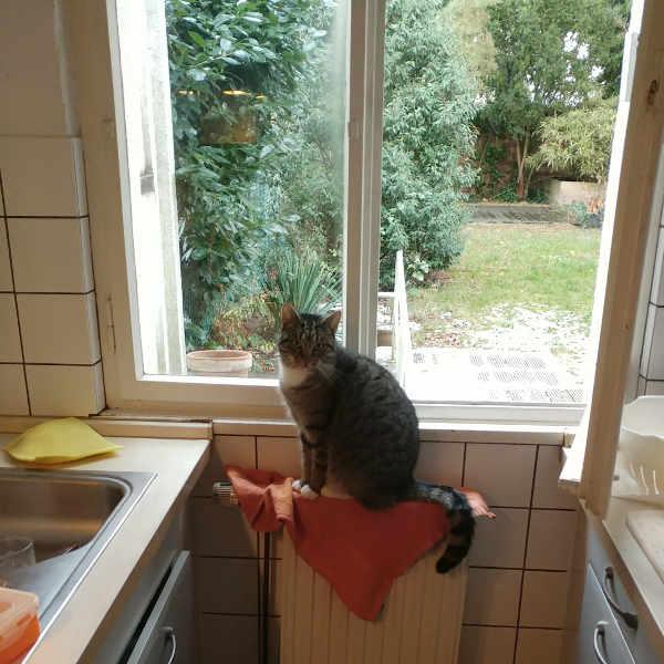 katze436_kitty_kassy4-jpg