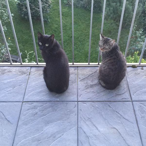 Cookie und Oreo