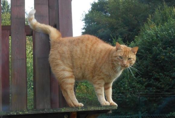 Miau, miau – Türchen 11 geht auf!