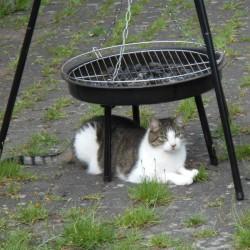 Miau, miau – Türchen 1 geht auf!