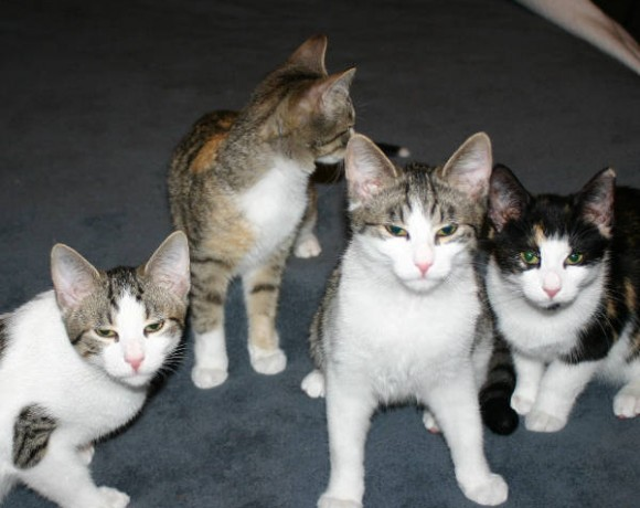 Bolle, Karlchen, Winnie und Leika
