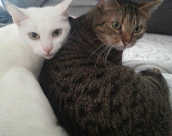 Bella und Jacky