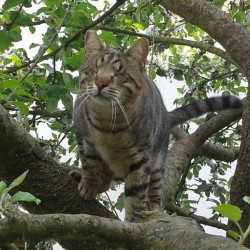 Miau, miau – Türchen 8 geht auf!