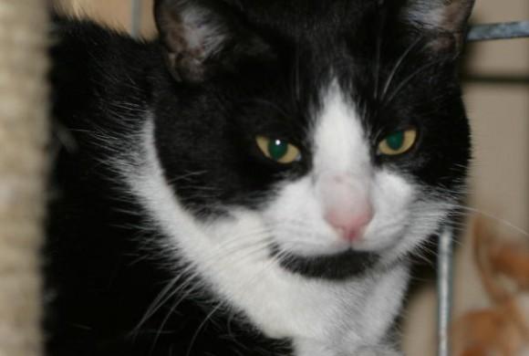 Miau, miau – Türchen 3 geht auf!