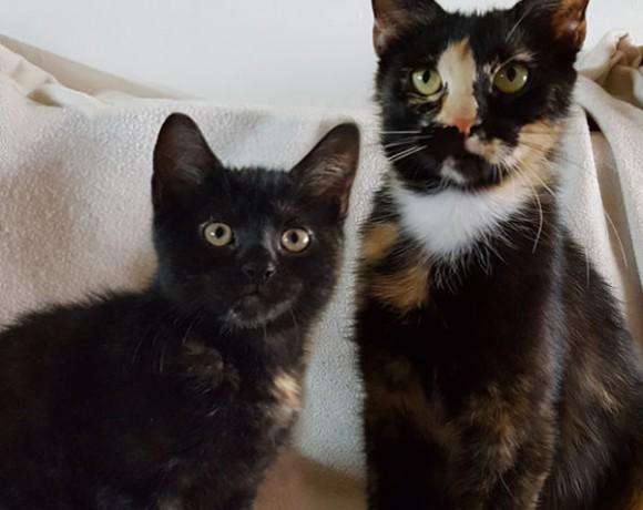 Stella und Roxy