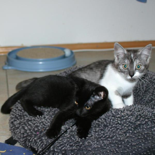 Sina und Willi