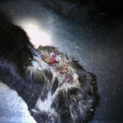 Zeig her, Deine Pfote! – Verletzte Katze an der Futterstelle