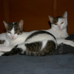 Miau, miau – Türchen 6 geht auf!