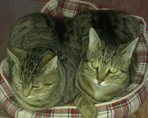 Albert und Alfons
