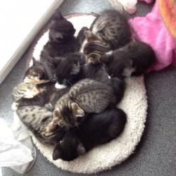 Alles Kindergarten? 50 Katzenbabys beim Katzenschutz