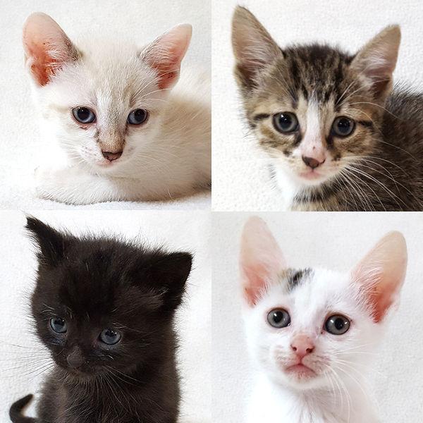 Alba, Lissy, Smokie, Lola