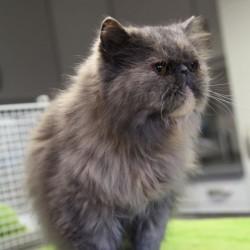 Miau, miau – Türchen 16 geht auf!