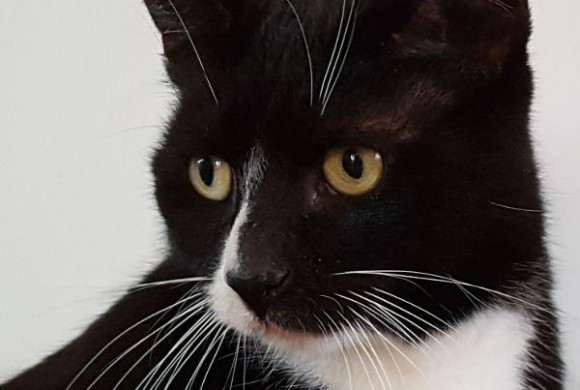 Miau, miau – Türchen 5 geht auf!