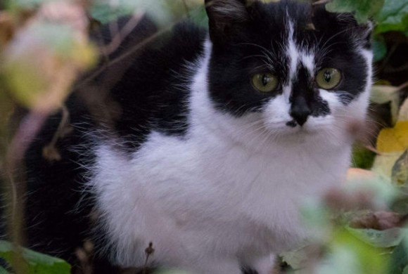 Miau, miau – Türchen 10 geht auf!