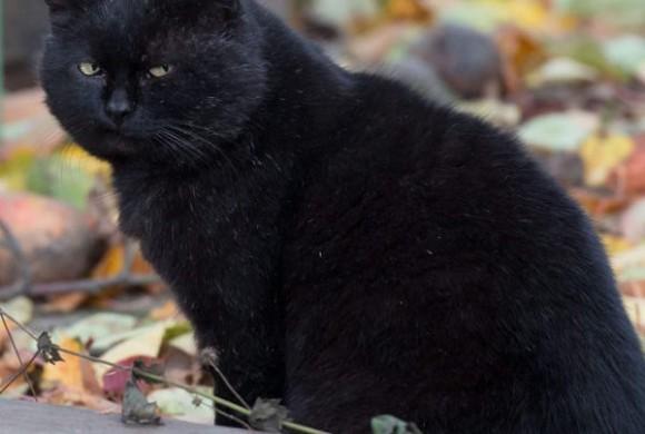 Miau, Miau – Türchen 22 geht auf!