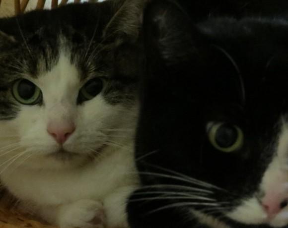 Daisy und Lilly