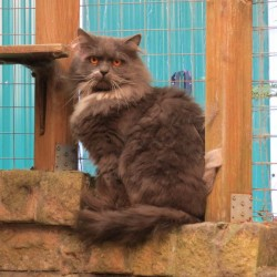 Miau, miau – Türchen 23 geht auf!