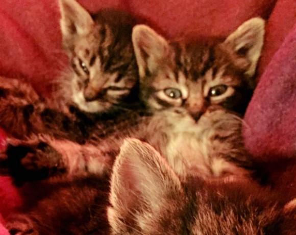Smilla und Leyla