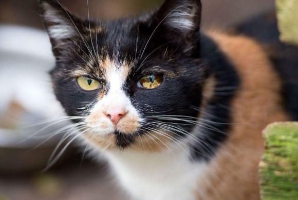 Miau, miau – Türchen 7 geht auf!