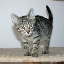 Miau, miau – Türchen 13 geht auf!