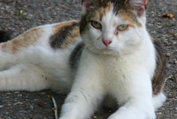 Miau, miau – Türchen 14 geht auf!