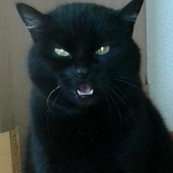 Miau, miau – Türchen 12 geht auf!