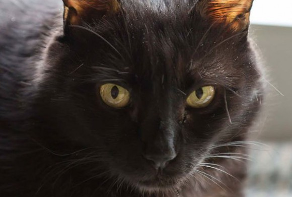 Miau, miau – Türchen 17 geht auf!