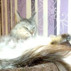 Miau, miau – Türchen 9 geht auf!