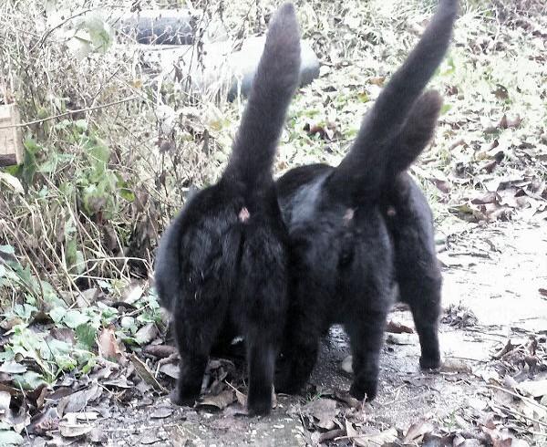 15. Dezember – Der Gartenkatzen Wunschzettel