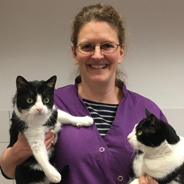 Vortrag über Senioren-Katzen von Tierärztin Michaela Hümmelchen