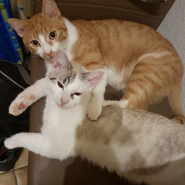 Tommy und Charlie