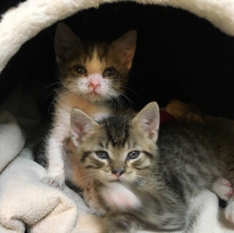 Windecker Katzenkinder