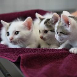 Welttierschutztag: Feiern und erinnern