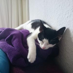 Katze742_X-Wurf_Home3