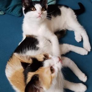 Katze742_X-Wurf_Home4