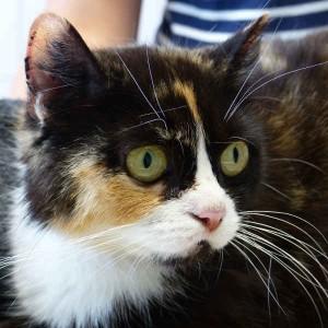 Mutterkatze Greta