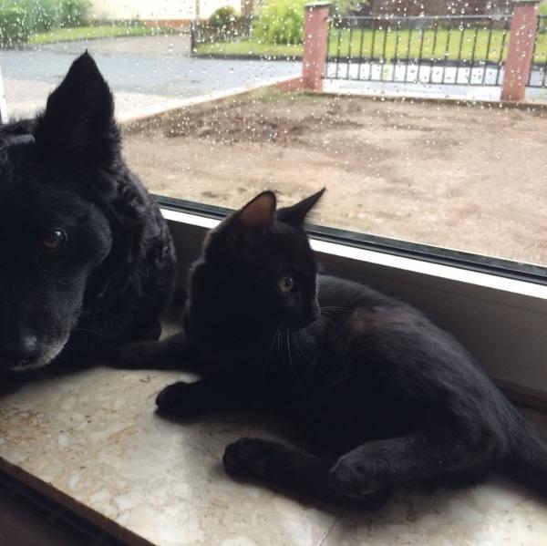 Finn und Matze