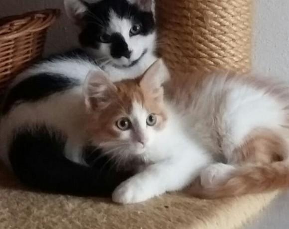Puschel und Nico