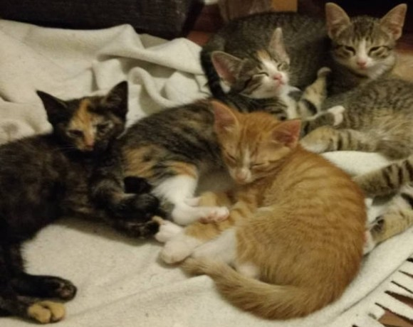 Oskar, Scarlett, Sally und Emily