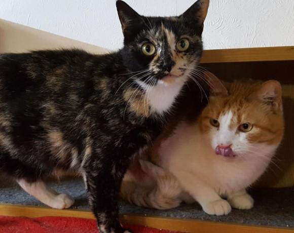 Toby und Sheila