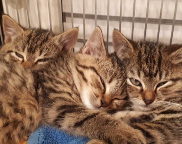 Emmy, Fluffy, Momo und Vivi