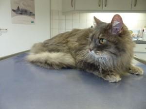 Katze Caroline beim Tierarzt